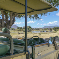Kwihala Camp and 3 Other Breathtaking Places to see Wild Elephants in  Africa
