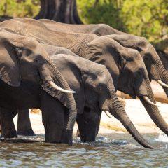 Travel Diaries: Zambia & Botswana