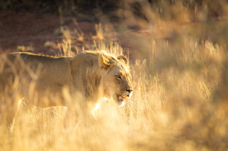 Best Place in Africa to see lions
